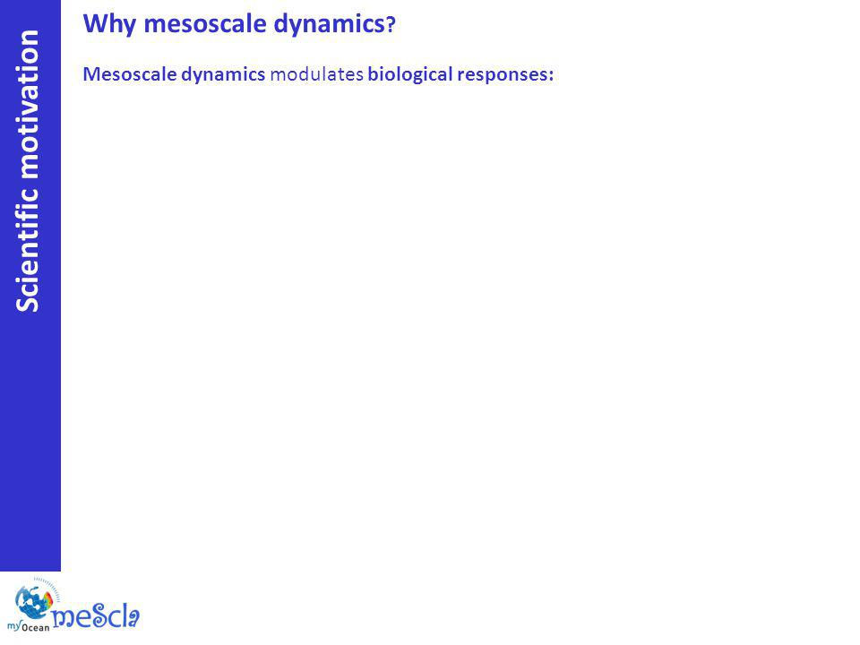 Why mesoscale dynamics Scientific motivation Mesoscale dynamics modulates biological responses: