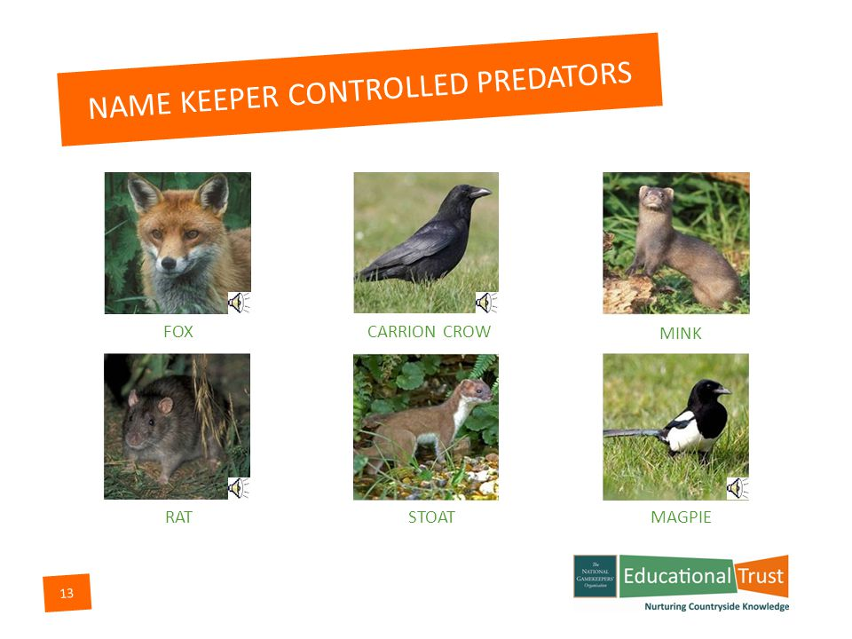 12 PEST/PREDATOR CONTROL Predators are meat eaters whose numbers need to be controlled for the benefit of game and other wildlife.