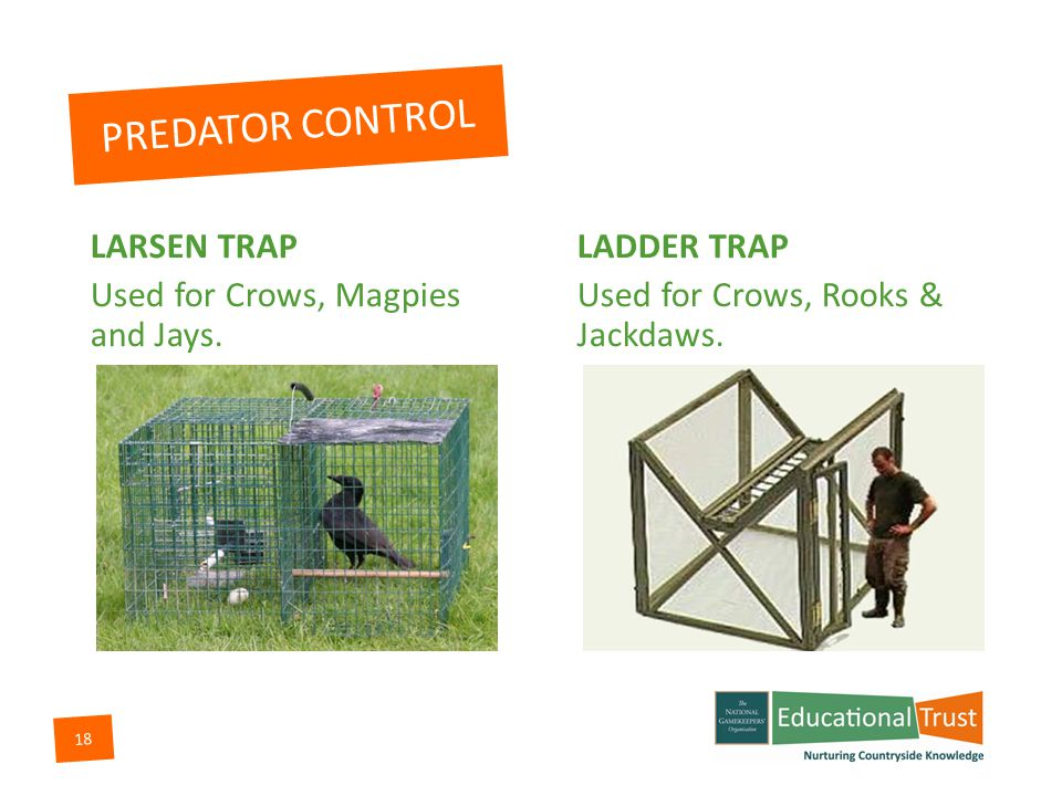 17 PREDATOR CONTROL SHOOTING Used for all predators & Pest species.