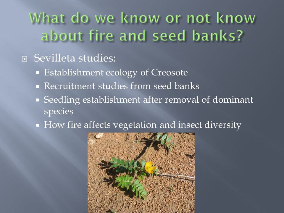 Sevilleta studies: Establishment ecology of Creosote Recruitment studies from seed banks Seedling establishment after removal of dominant species How fire affects vegetation and insect diversity