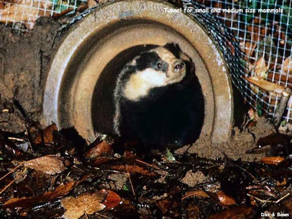 Das & Boom Tunnel for small and medium size mammals Das & Boom Tunnel for small and medium size mammals