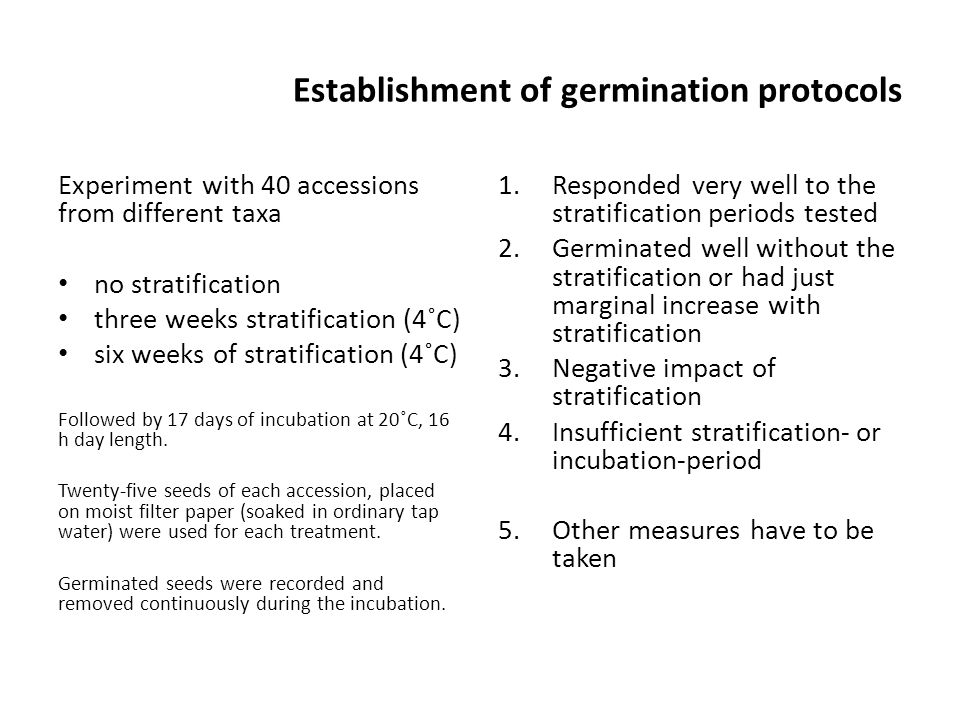 Establishment of germination protocols Experiment with 40 accessions from different taxa no stratification three weeks stratification (4˚C) six weeks of stratification (4˚C) Followed by 17 days of incubation at 20˚C, 16 h day length.