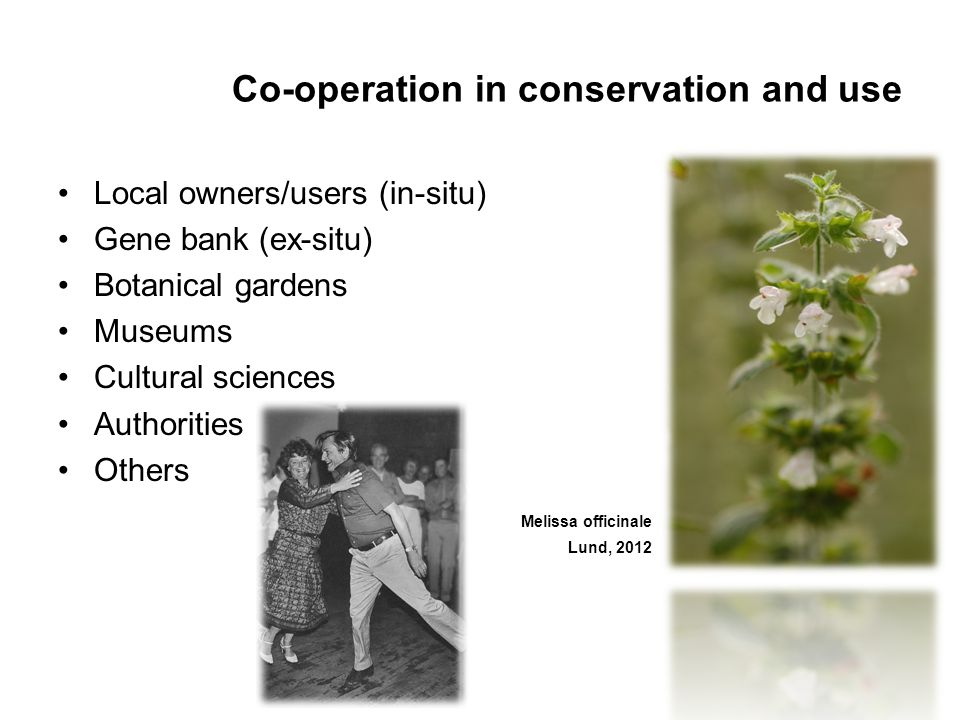 Co-operation in conservation and use Local owners/users (in-situ) Gene bank (ex-situ) Botanical gardens Museums Cultural sciences Authorities Others Melissa officinale Lund, 2012