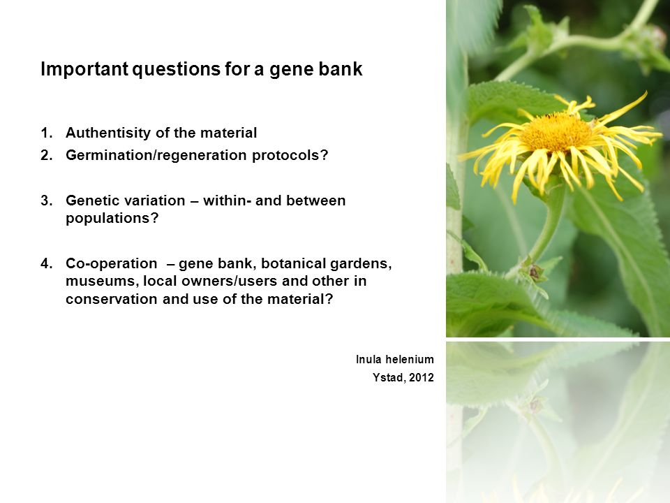 Important questions for a gene bank 1.Authentisity of the material 2.Germination/regeneration protocols.