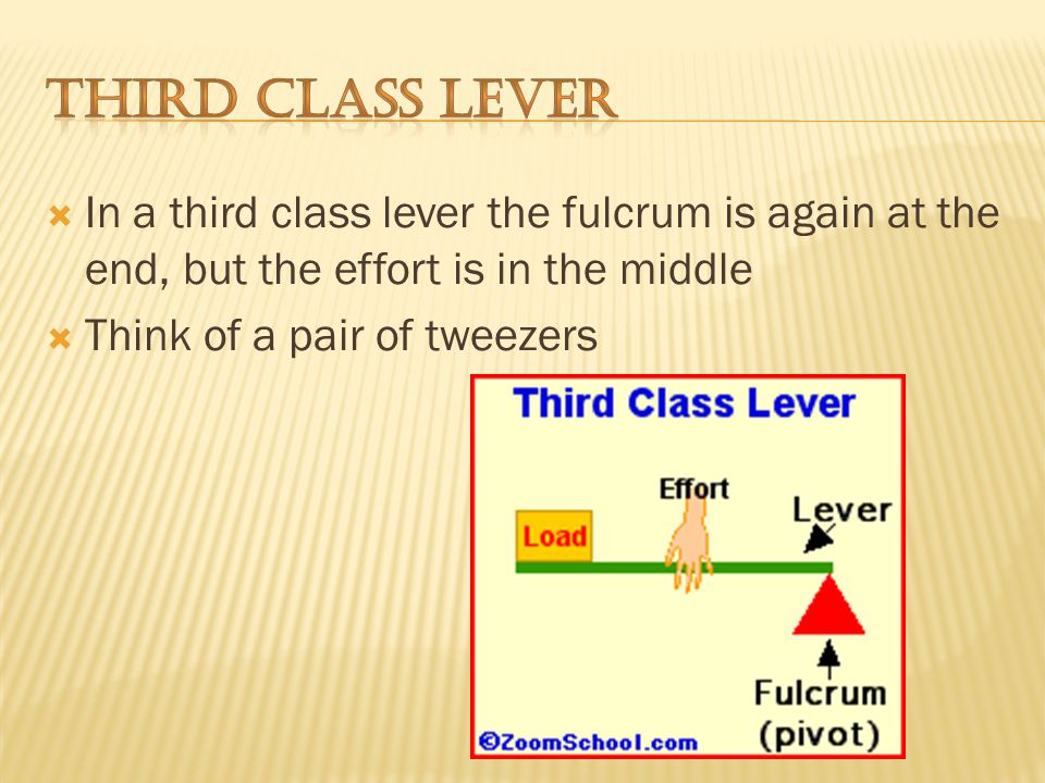 In a second class lever the fulcrum is at the end, with the load in the middle.