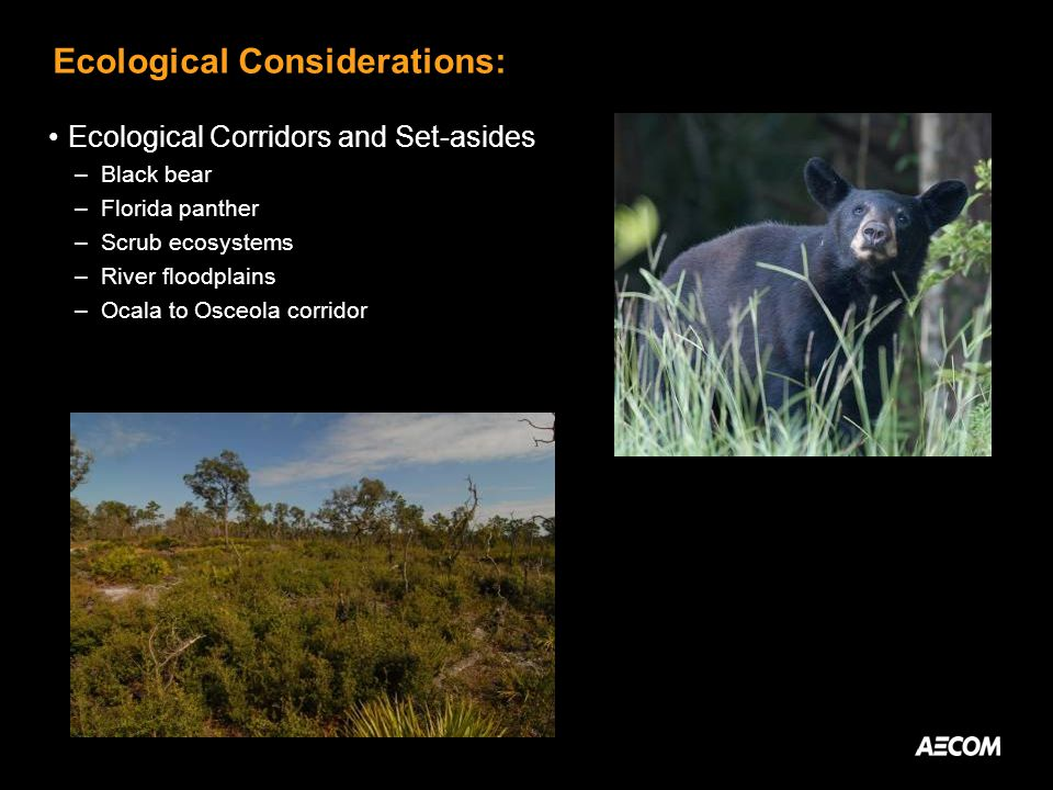 Ecological Considerations: Ecological Corridors and Set-asides –Black bear –Florida panther –Scrub ecosystems –River floodplains –Ocala to Osceola corridor