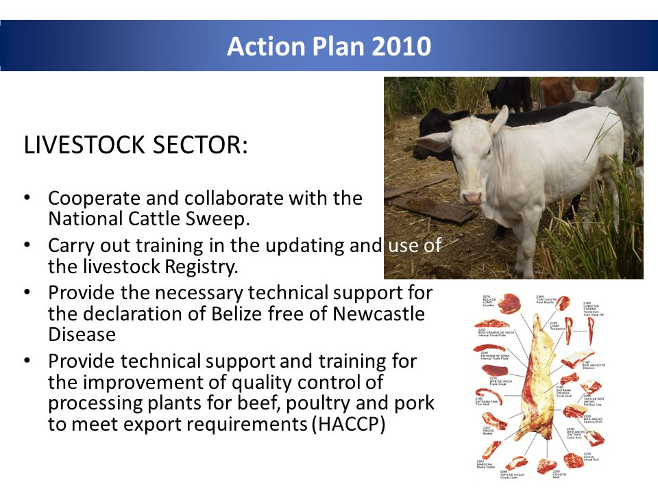 Action Plan 2010 LIVESTOCK SECTOR: Cooperate and collaborate with the National Cattle Sweep.
