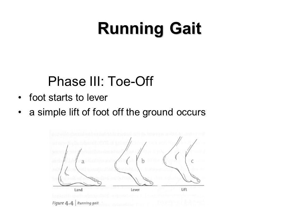 Running Gait Phase III: Toe-Off foot starts to lever a simple lift of foot off the ground occurs Insert fig.
