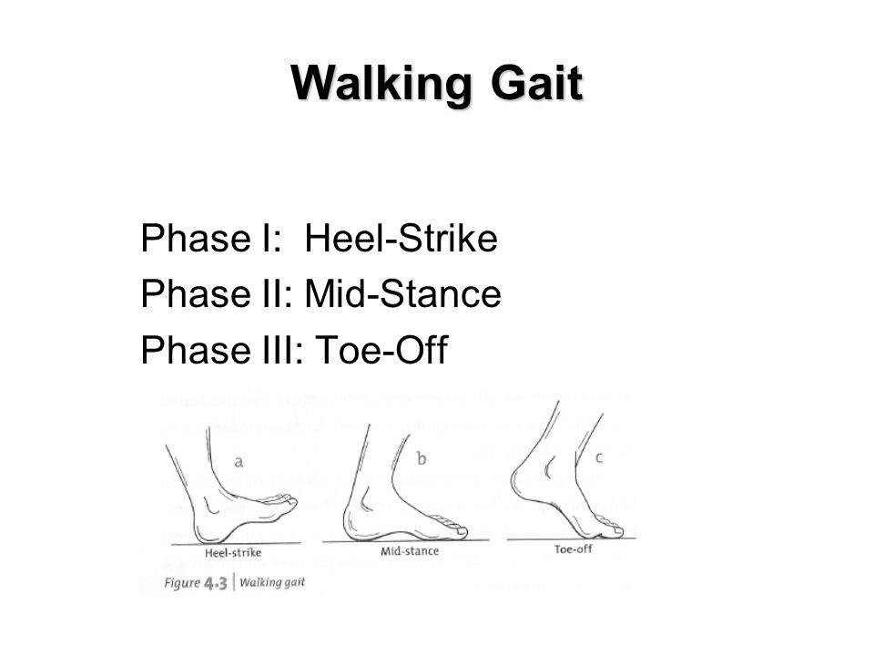Walking Gait Phase I: Heel-Strike Phase II: Mid-Stance Phase III: Toe-Off Insert fig. 4-3