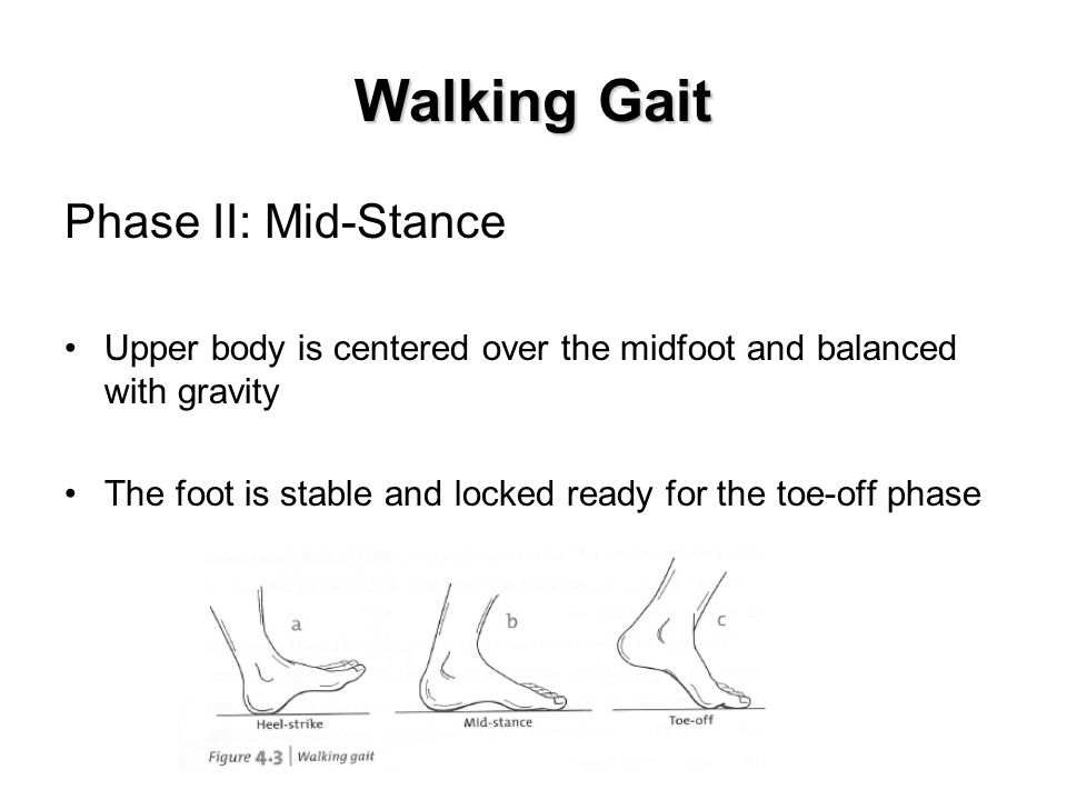 Walking Gait Phase II: Mid-Stance Upper body is centered over the midfoot and balanced with gravity The foot is stable and locked ready for the toe-off phase