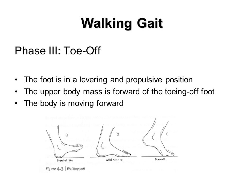 Walking Gait Phase III: Toe-Off The foot is in a levering and propulsive position The upper body mass is forward of the toeing-off foot The body is moving forward