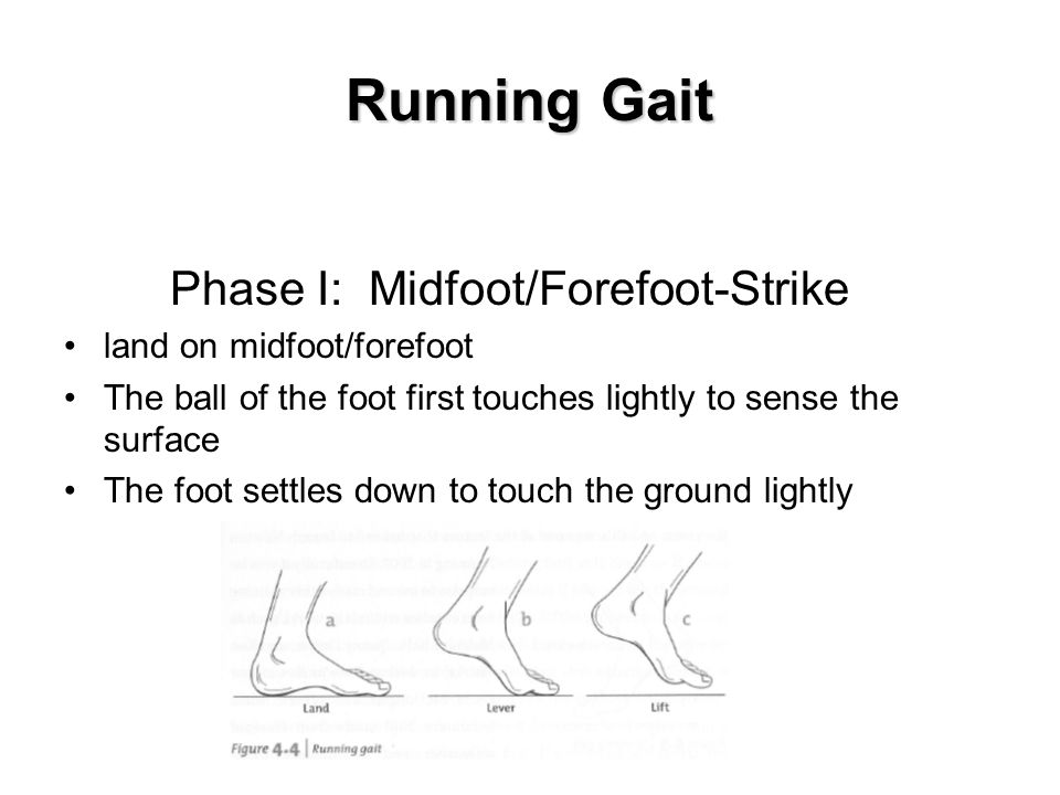 Running Gait Phase I: Midfoot/Forefoot-Strike land on midfoot/forefoot The ball of the foot first touches lightly to sense the surface The foot settles down to touch the ground lightly Insert fig.