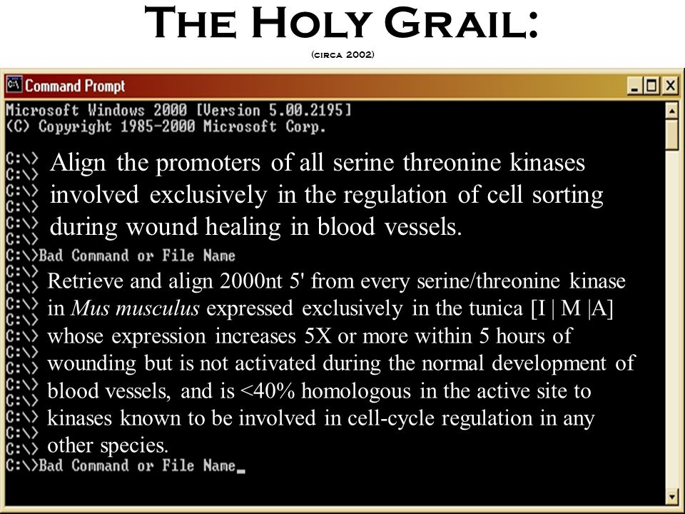 The Holy Grail: (circa 2002) Align the promoters of all serine threonine kinases involved exclusively in the regulation of cell sorting during wound healing in blood vessels.
