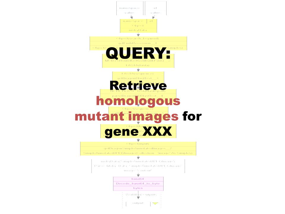 QUERY: Retrieve homologous mutant images for gene XXX