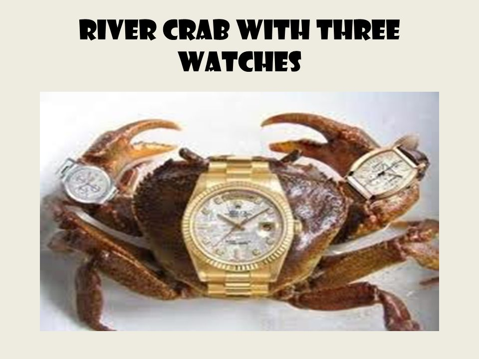 River crab with three watches