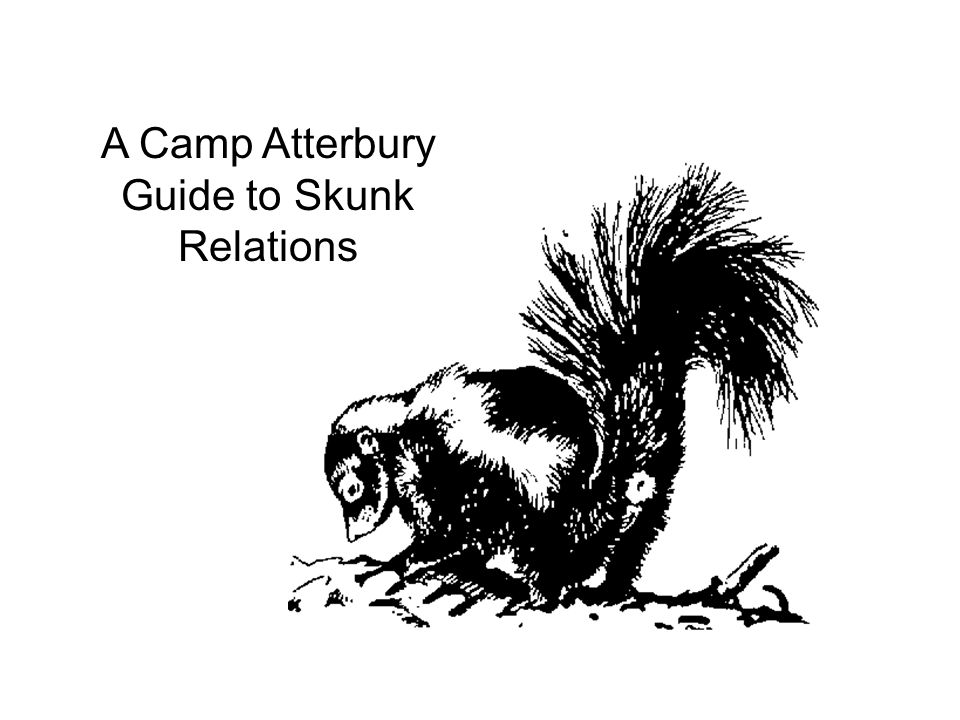 A Camp Atterbury Guide to Skunk Relations