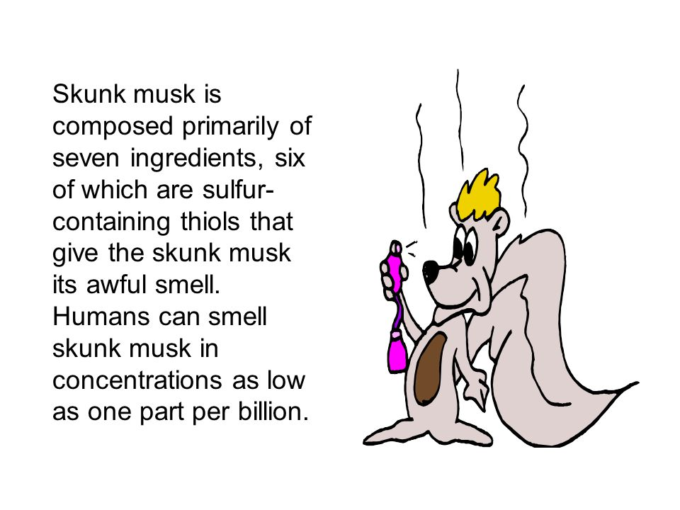 Skunk musk is composed primarily of seven ingredients, six of which are sulfur- containing thiols that give the skunk musk its awful smell.