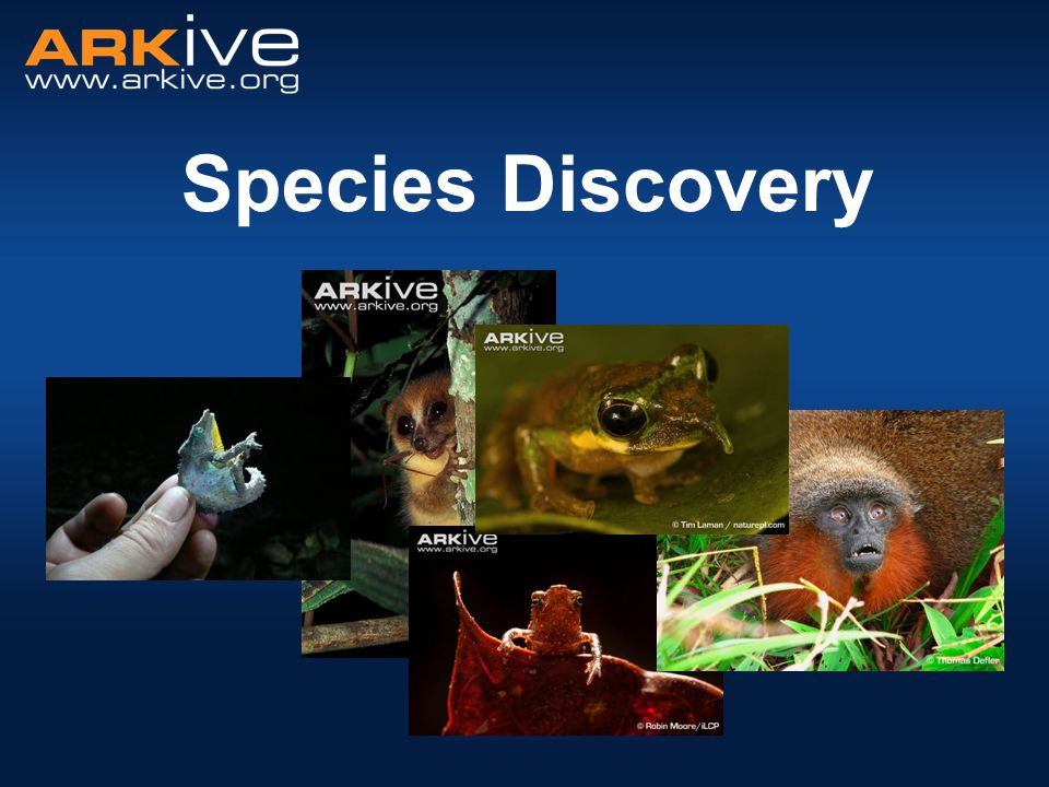 Species Discovery
