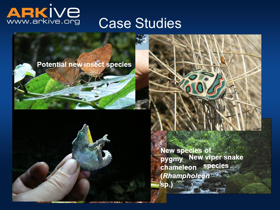 Case Studies Mount Mabu, Mozambique Unexplored & Biodiversity rich 3 new butterfly species New viper snake species Potential new insect species New species of pygmy chameleon (Rhampholeon sp.)