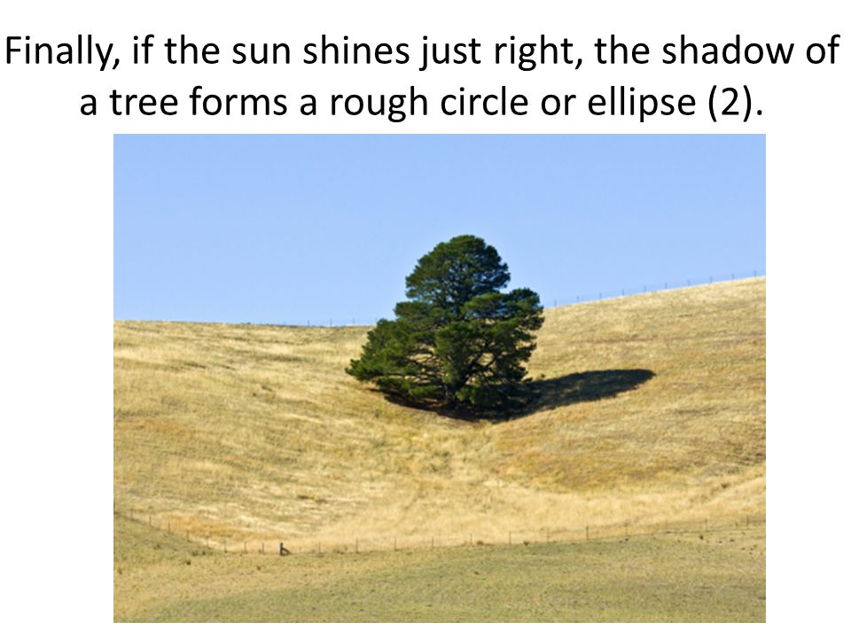 Finally, if the sun shines just right, the shadow of a tree forms a rough circle or ellipse (2).