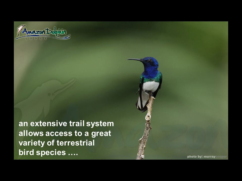 an extensive trail system allows access to a great variety of terrestrial bird species ….