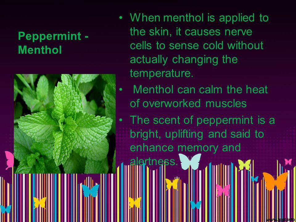 Peppermint - Menthol When menthol is applied to the skin, it causes nerve cells to sense cold without actually changing the temperature.