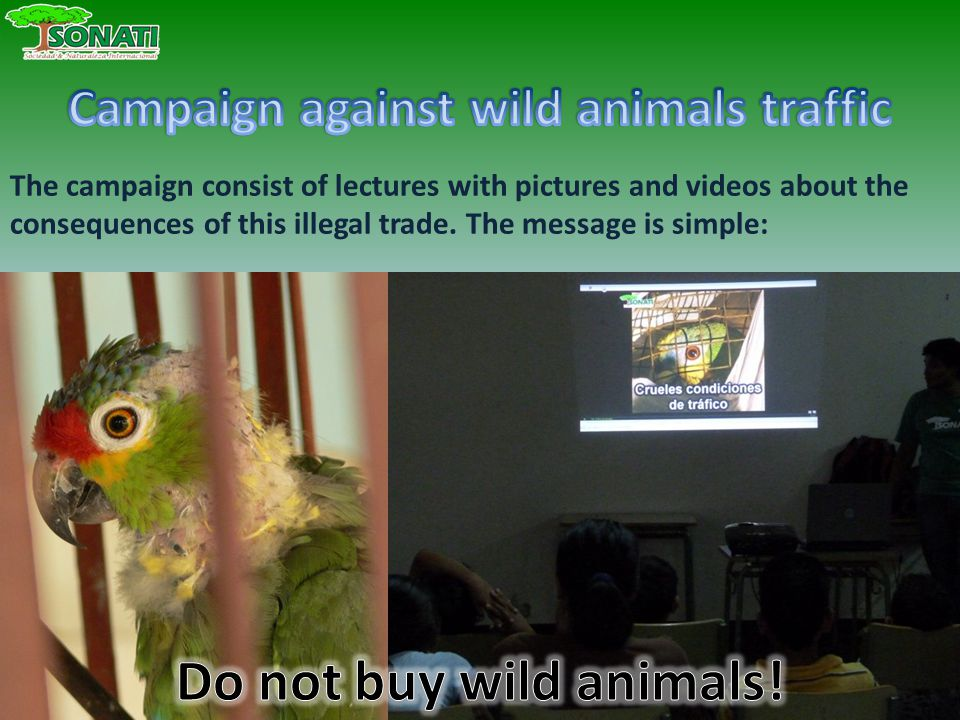 The campaign consist of lectures with pictures and videos about the consequences of this illegal trade.