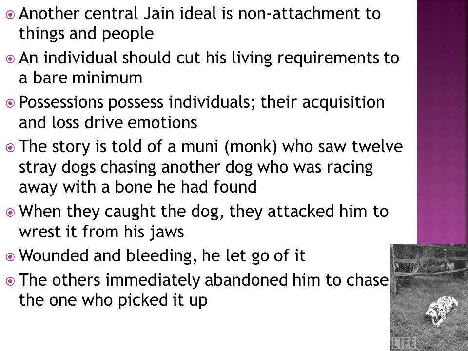 Another central Jain ideal is non-attachment to things and people An individual should cut his living requirements to a bare minimum Possessions possess individuals; their acquisition and loss drive emotions The story is told of a muni (monk) who saw twelve stray dogs chasing another dog who was racing away with a bone he had found When they caught the dog, they attacked him to wrest it from his jaws Wounded and bleeding, he let go of it The others immediately abandoned him to chase the one who picked it up