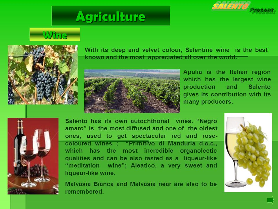 Present Agriculture With its deep and velvet colour, Salentine wine is the best known and the most appreciated all over the world.