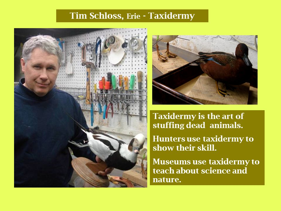 Tim Schloss, Erie - Taxidermy Taxidermy is the art of stuffing dead animals.