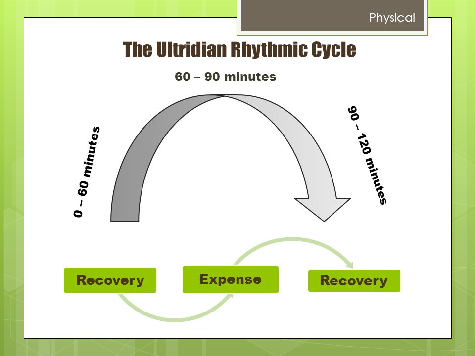 The Ultridian Rhythmic Cycle 0 – 60 minutes 60 – 90 minutes 90 – 120 minutes Recovery Expense Recovery Physical