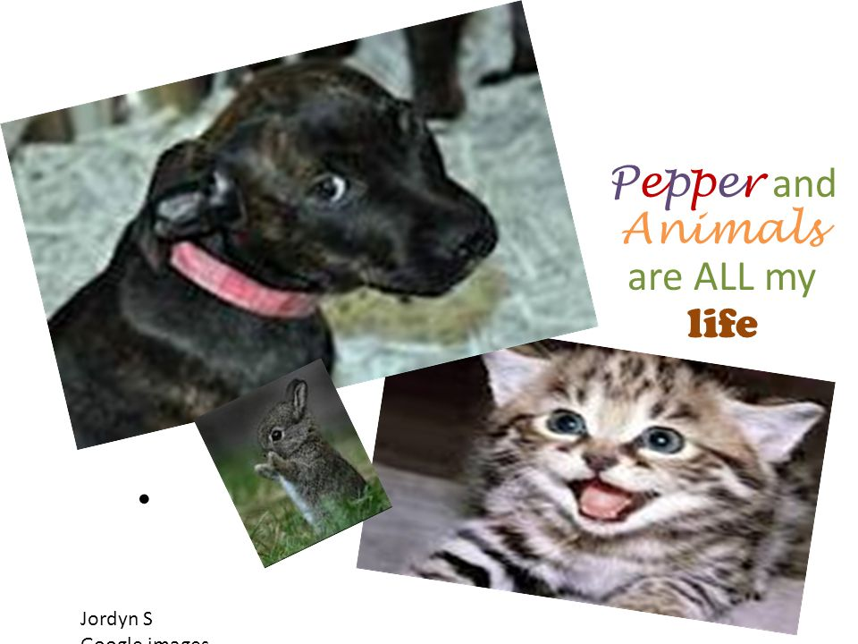Pepper and Animals are ALL my life Jordyn S Google images