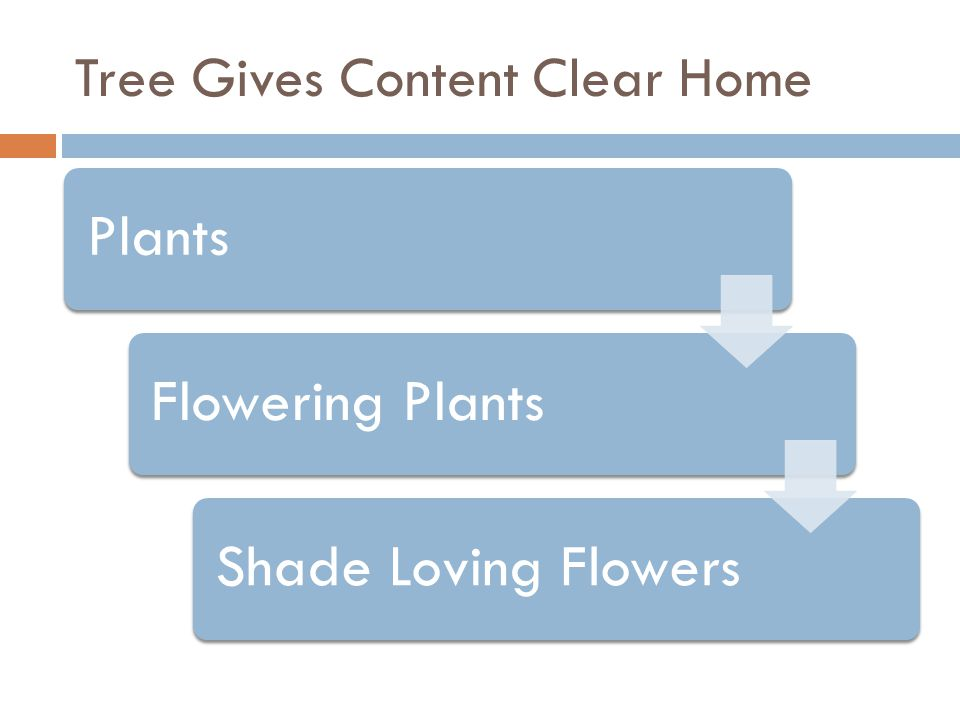 Tree Gives Content Clear Home PlantsFlowering PlantsShade Loving Flowers