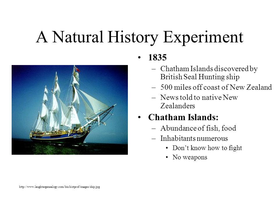 A Natural History Experiment 1835 –Chatham Islands discovered by British Seal Hunting ship –500 miles off coast of New Zealand –News told to native New Zealanders Chatham Islands: –Abundance of fish, food –Inhabitants numerous Dont know how to fight No weapons http://www.laughtergenealogy.com/bin/histprof/images/ship.jpg
