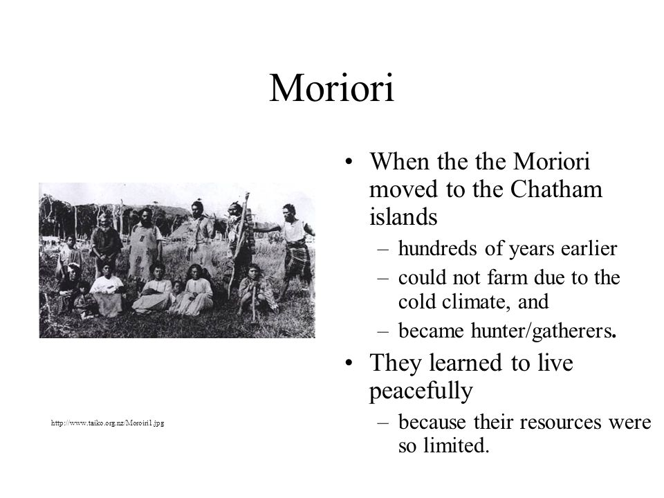Moriori When the the Moriori moved to the Chatham islands –hundreds of years earlier –could not farm due to the cold climate, and –became hunter/gatherers.