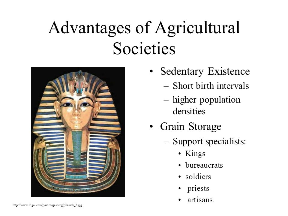 Advantages of Agricultural Societies Sedentary Existence –Short birth intervals –higher population densities Grain Storage –Support specialists: Kings bureaucrats soldiers priests artisans.