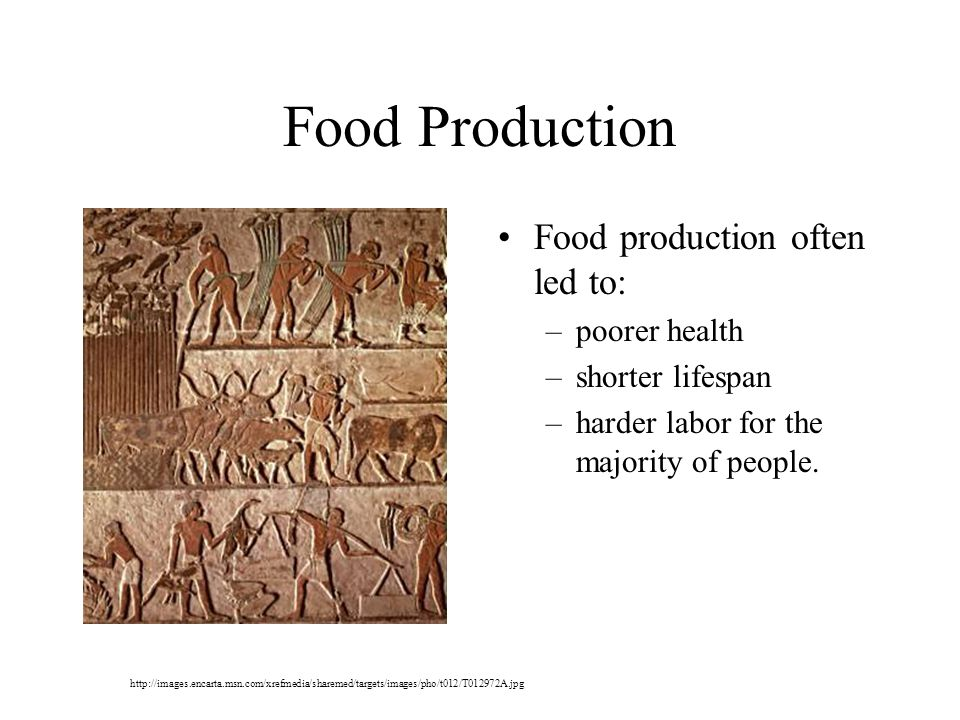 Food Production Food production often led to: –poorer health –shorter lifespan –harder labor for the majority of people.