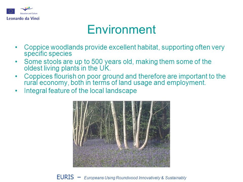 EURIS – Europeans Using Roundwood Innovatively & Sustainably Environment Coppice woodlands provide excellent habitat, supporting often very specific species Some stools are up to 500 years old, making them some of the oldest living plants in the UK.