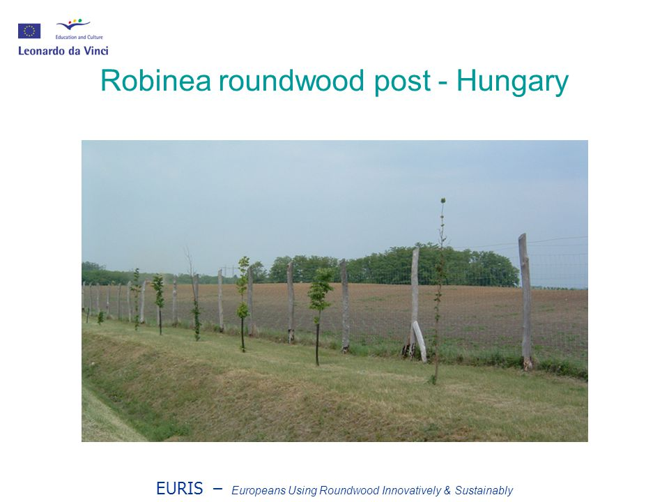 EURIS – Europeans Using Roundwood Innovatively & Sustainably Robinea roundwood post - Hungary