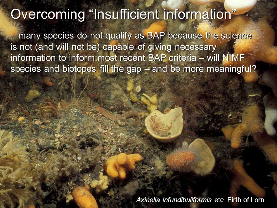 Overcoming Insufficient information – many species do not qualify as BAP because the science is not (and will not be) capable of giving necessary information to inform most recent BAP criteria – will NIMF species and biotopes fill the gap – and be more meaningful.