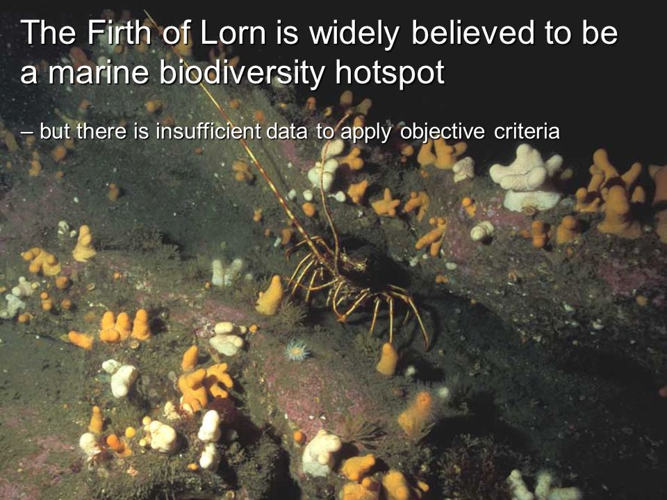 The Firth of Lorn is widely believed to be a marine biodiversity hotspot – but there is insufficient data to apply objective criteria