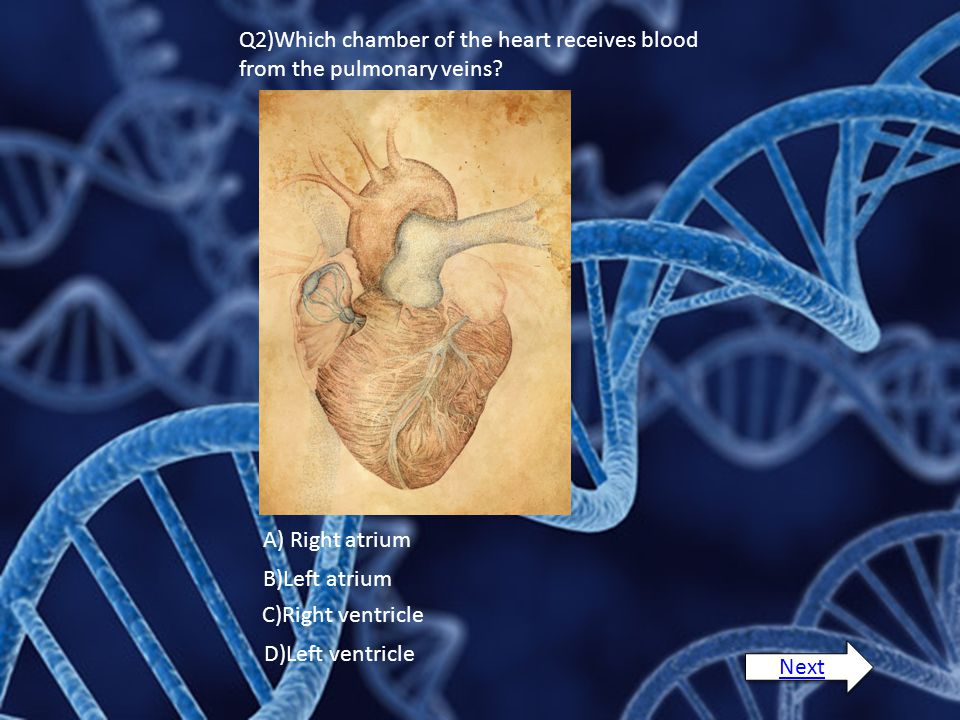 Q2)Which chamber of the heart receives blood from the pulmonary veins.