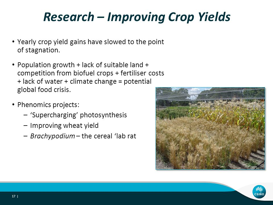 Research – Improving Crop Yields 17 | Yearly crop yield gains have slowed to the point of stagnation.