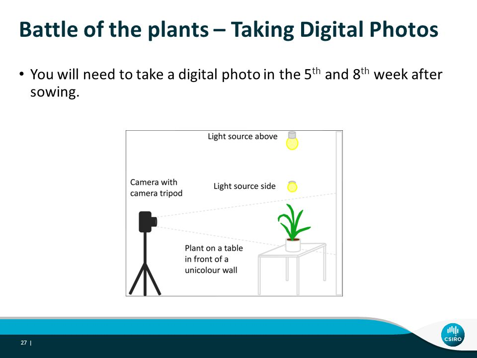 Battle of the plants – Taking Digital Photos You will need to take a digital photo in the 5 th and 8 th week after sowing.