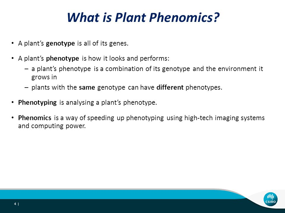What is Plant Phenomics. A plants genotype is all of its genes.