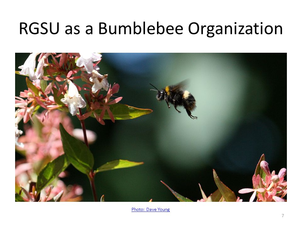 RGSU as a Bumblebee Organization Photo: Dave Young 7