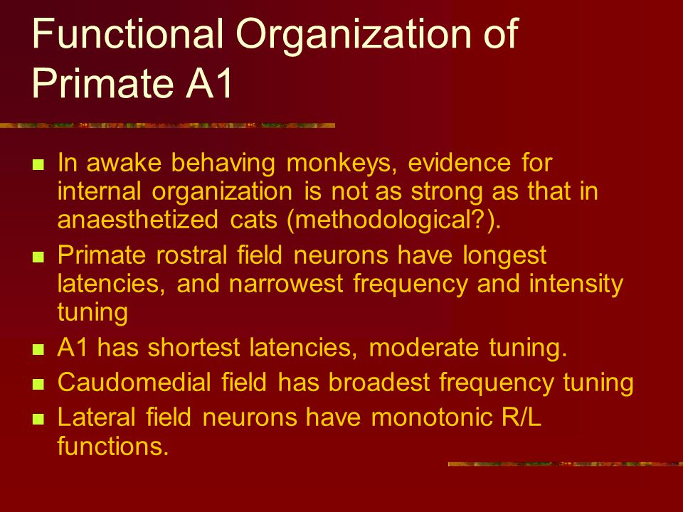 Functional Organization of Primate A1 In awake behaving monkeys, evidence for internal organization is not as strong as that in anaesthetized cats (methodological ).