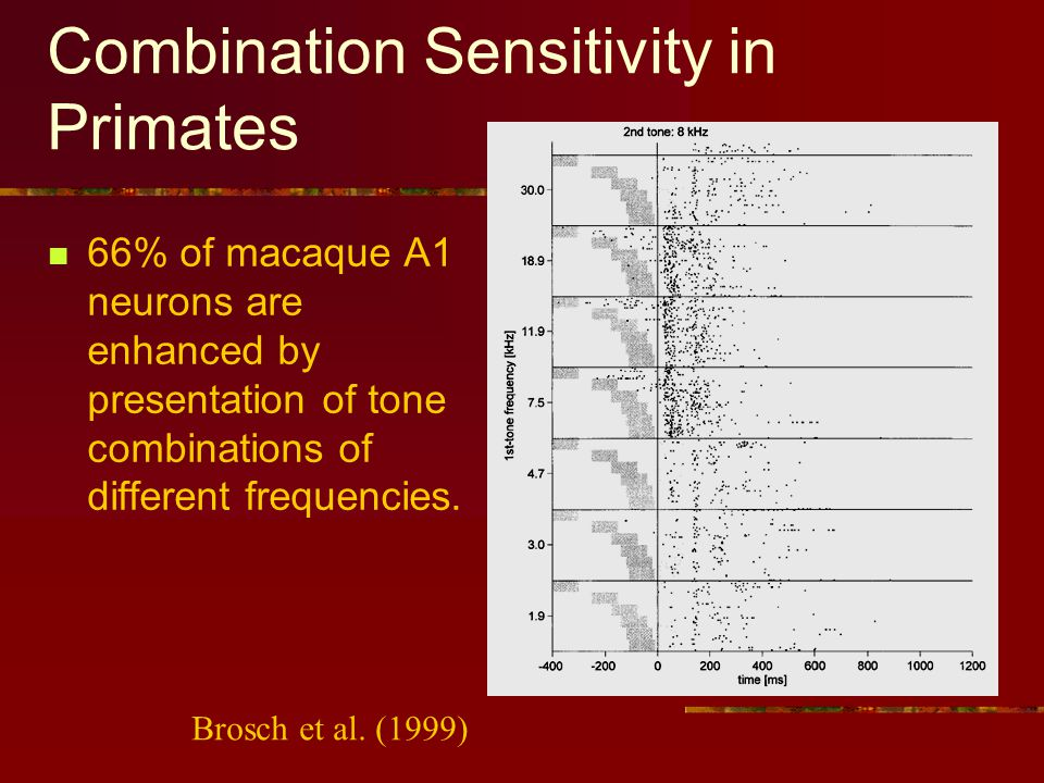 Combination Sensitivity in Primates 66% of macaque A1 neurons are enhanced by presentation of tone combinations of different frequencies.