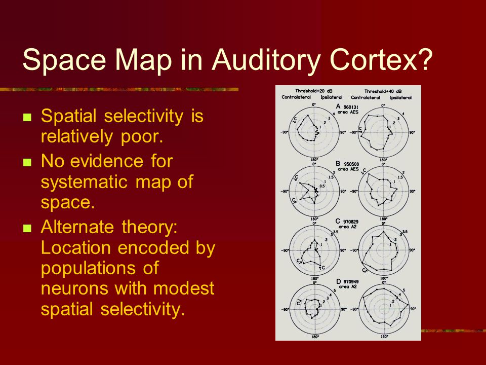 Space Map in Auditory Cortex. Spatial selectivity is relatively poor.