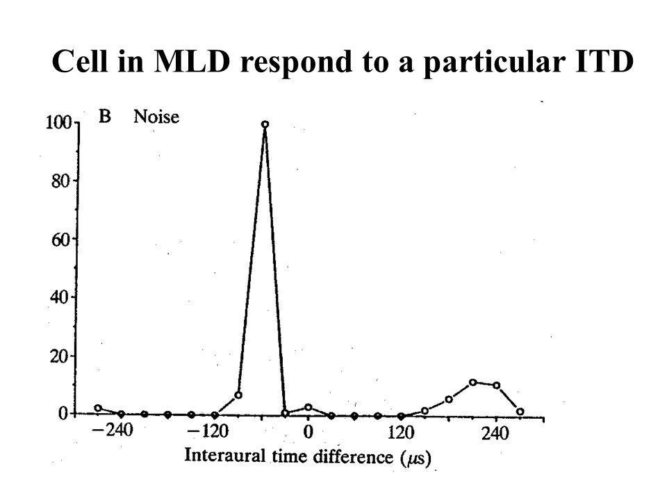 Cell in MLD respond to a particular ITD